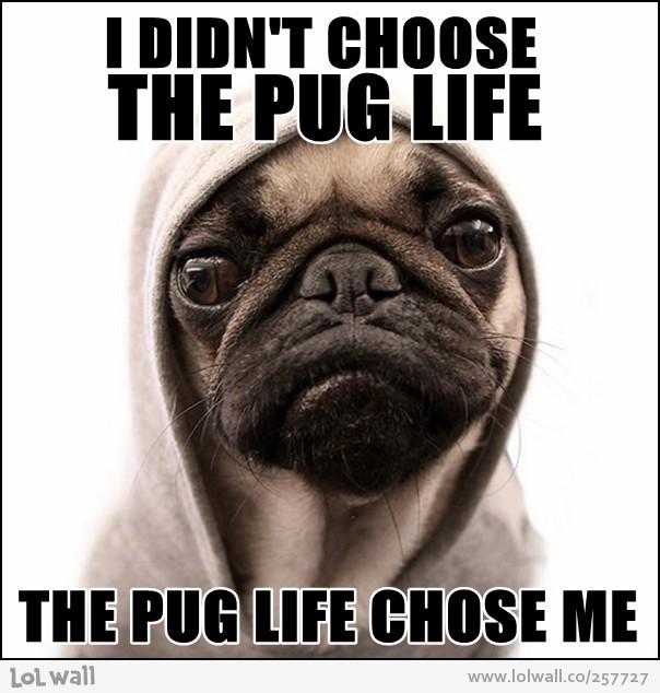 Image Result For Thug Life Chose Me